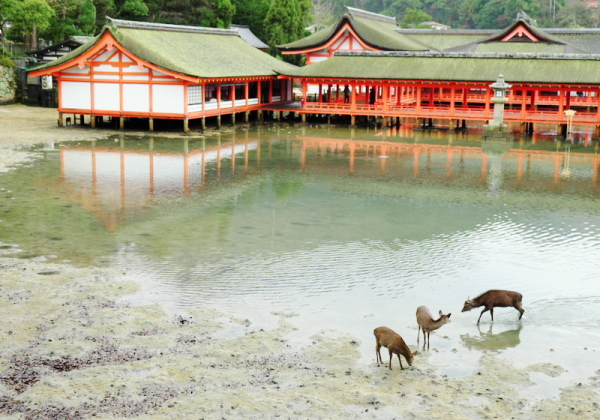 Itsukushima shrine and deer