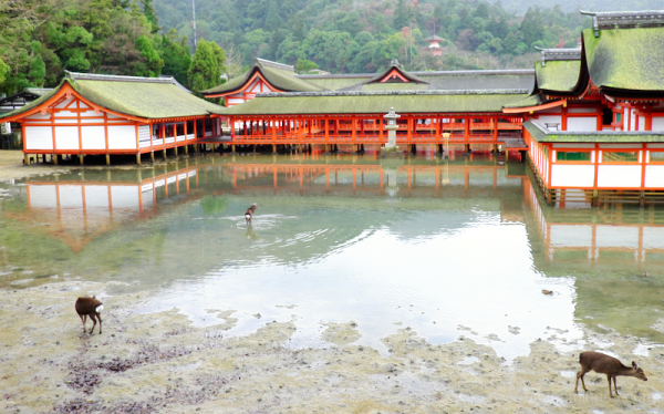 The shrine and deers(Miyajima)