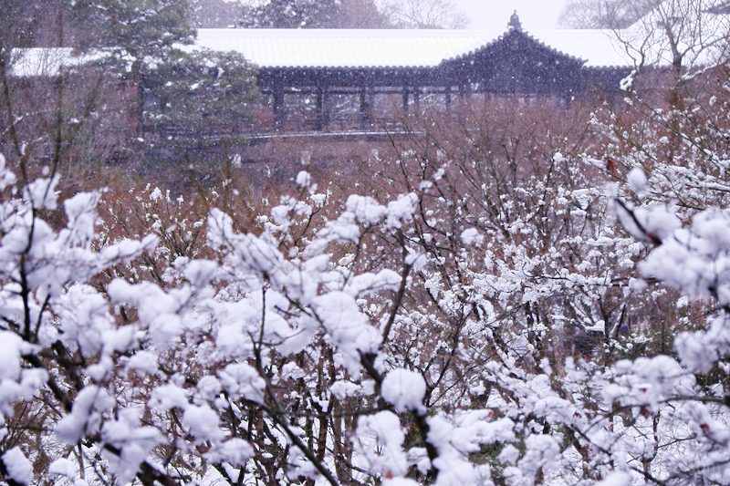 Covered with snow..........(Tofukuji temple)