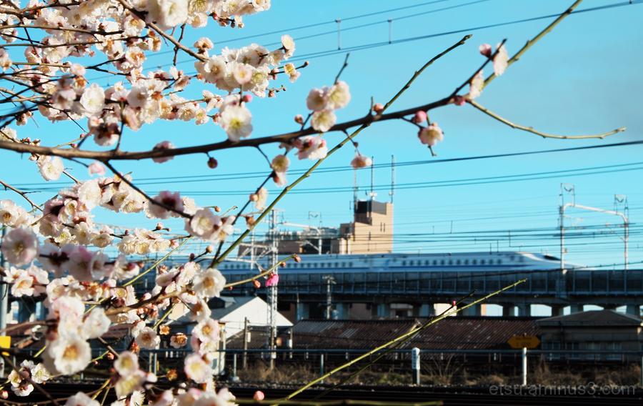 """Shinkansen"" is running ............."