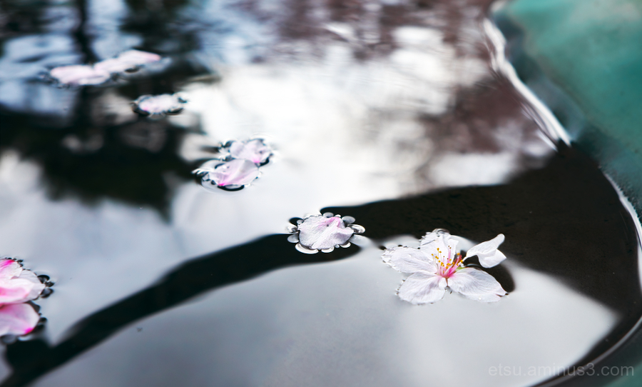 Petals on the water.........