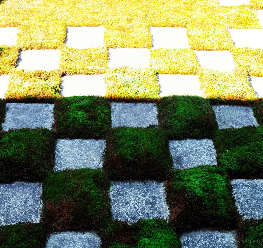 Checked garden in Tofuji temple