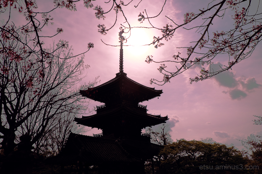 Silhouette of a pagoda with cherry blossoms