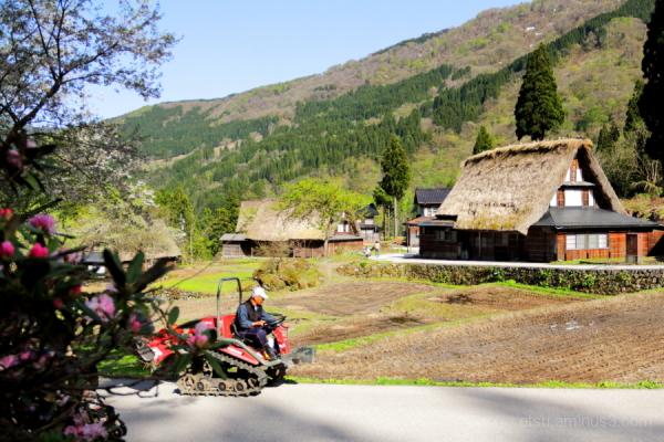 Ainokura-World heritage site-in the rice planting