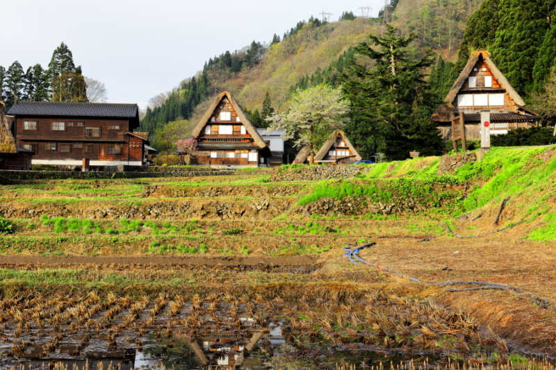 Ainokura-World heritage site-in early summer
