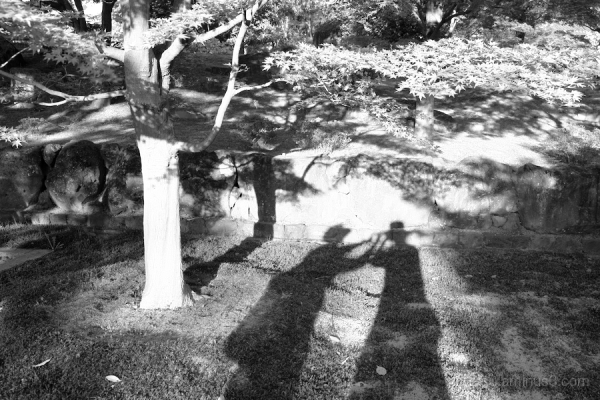 A shadow picture.......