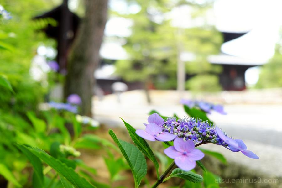 I love the rainy season.......