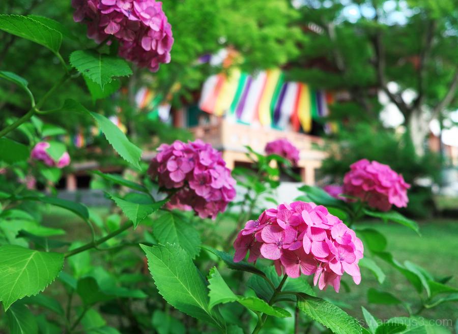We love the rainy season..........
