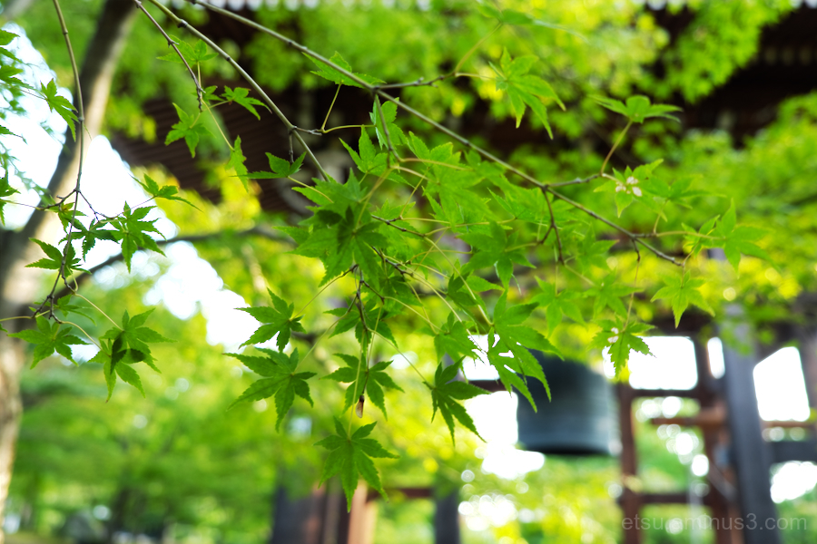 Green leaves near a bell
