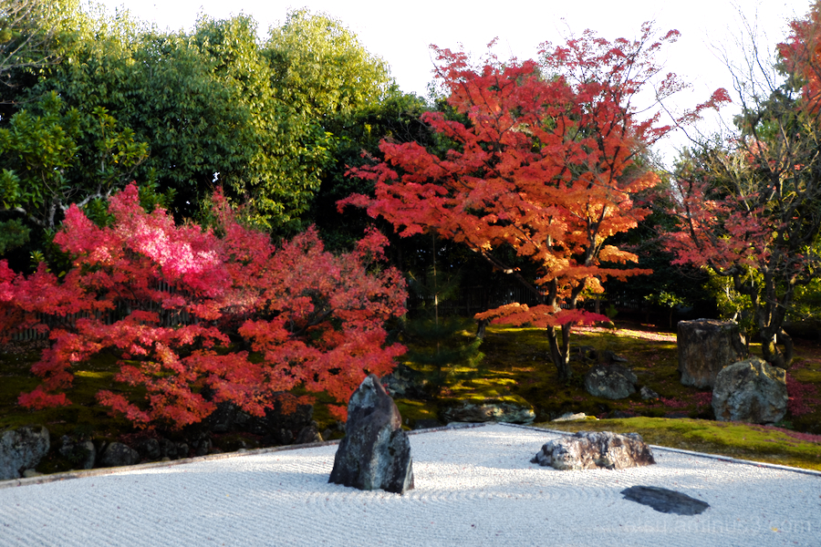 Red leaves at the dry garden