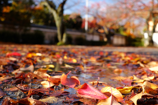 Fallen leaves at a temple