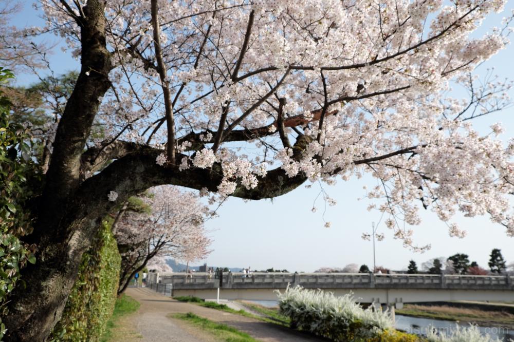 Along Kamogawa river