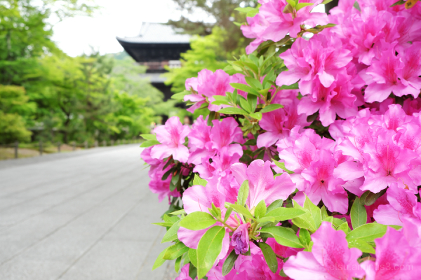 Zen temple with blooming flowers