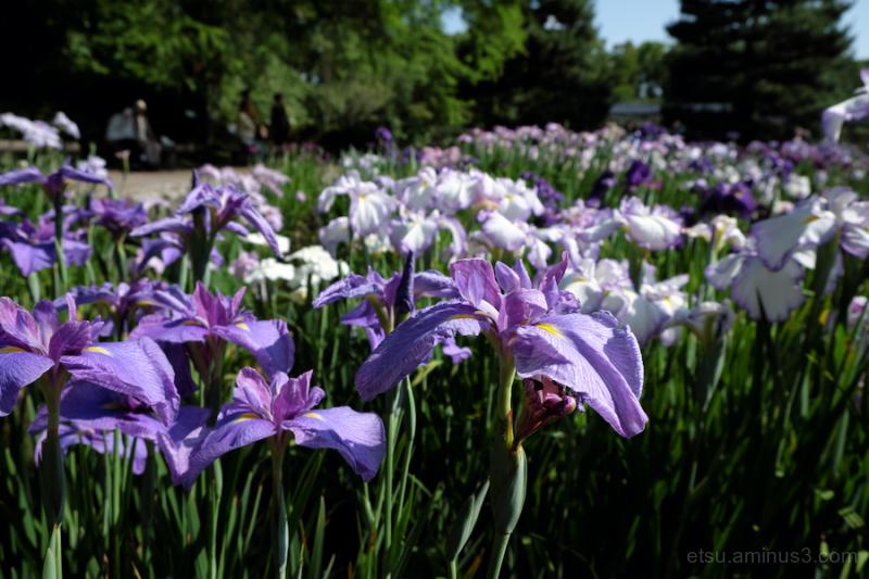 In botanical garden