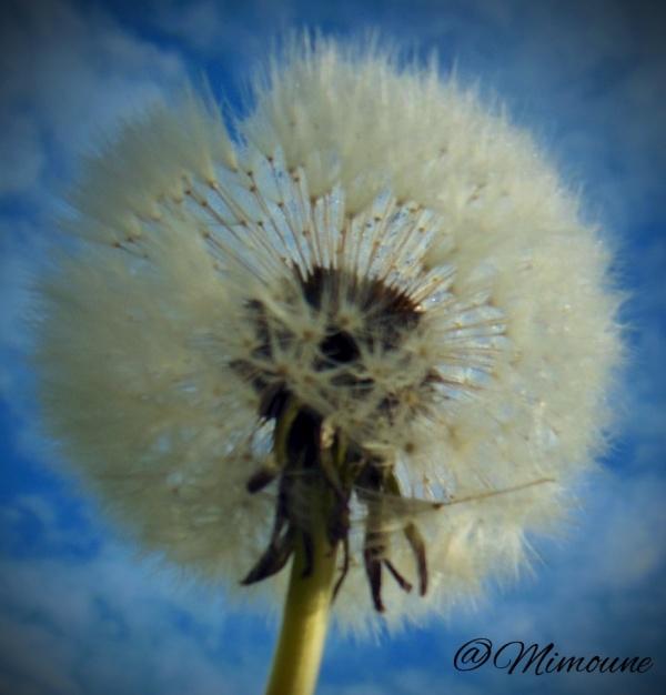 Souffle de vent