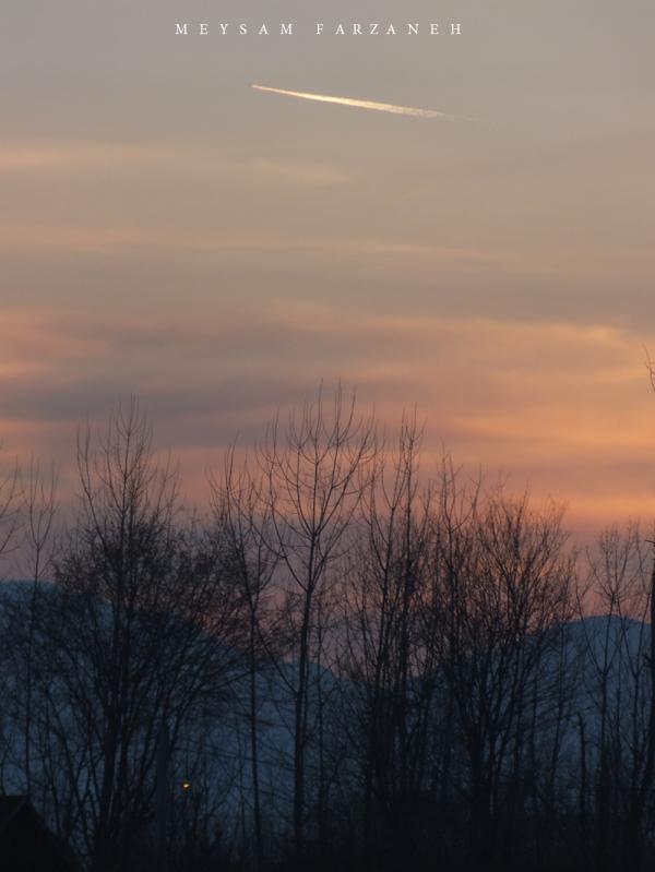 trees, Sky & Plane