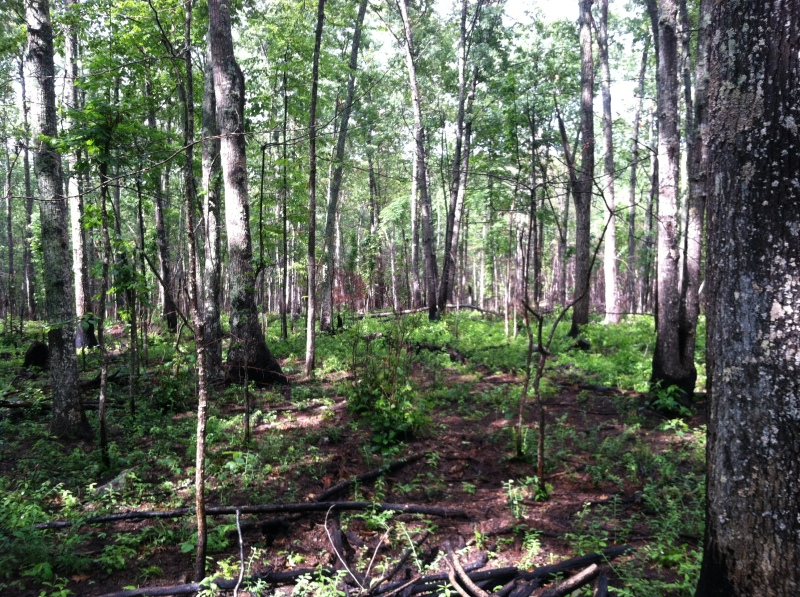 Understory response following controled burn