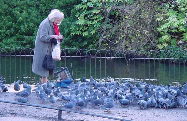 Lady Feeding Pigeons In Dublin