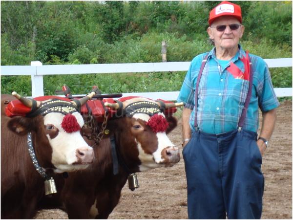 Winner in Oxen Show At New Ross Fair