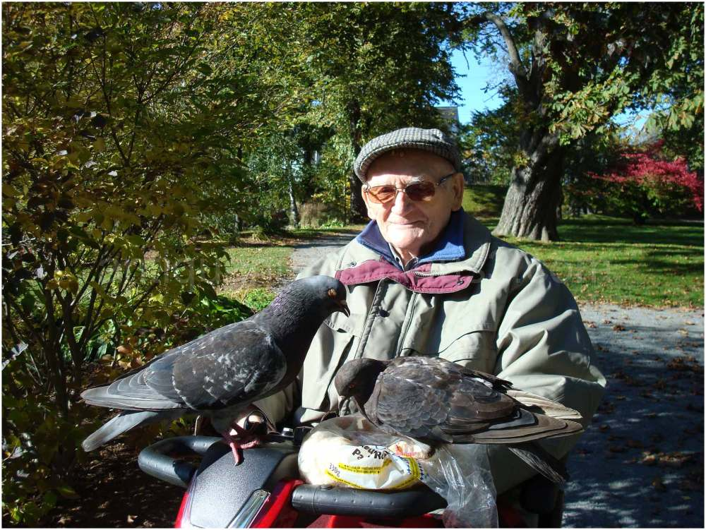 Dad Feeding the Pigeons at the Park
