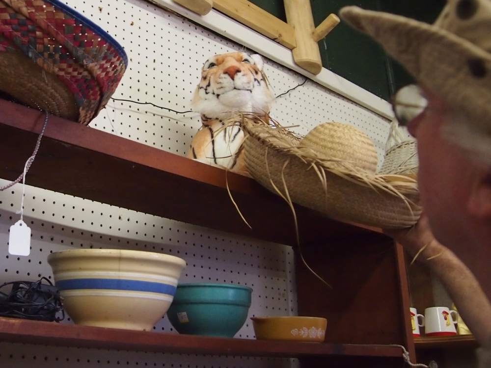 The Hat Hunter - A Tiger !