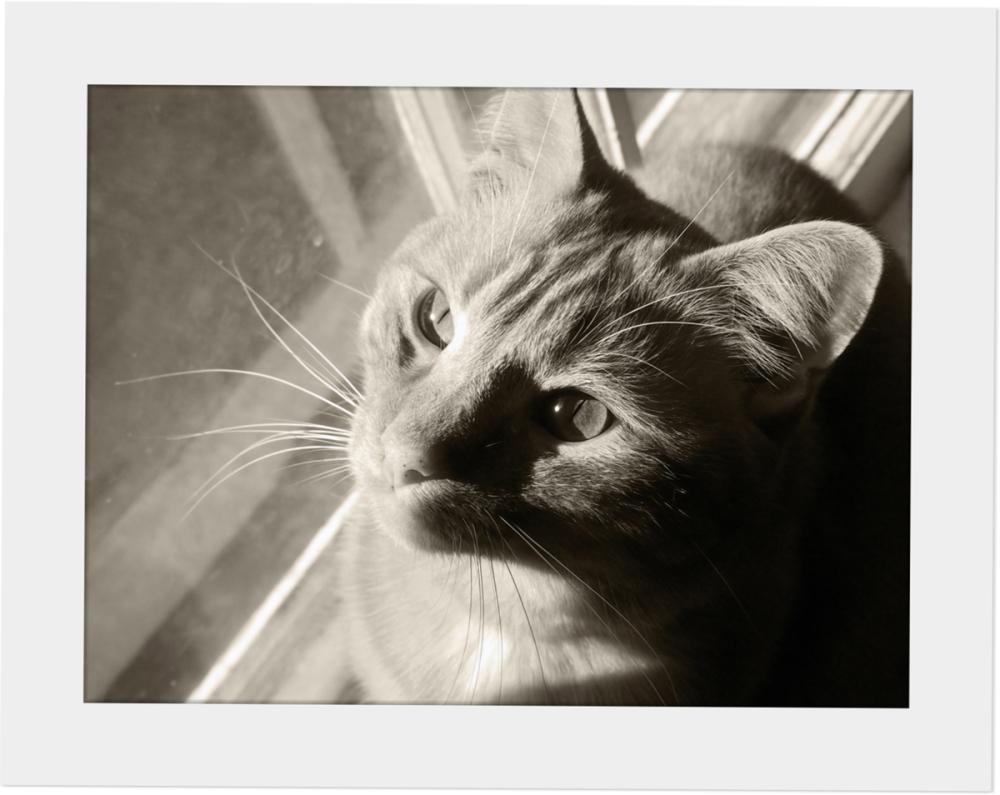 Odd Shots - Riley at Window