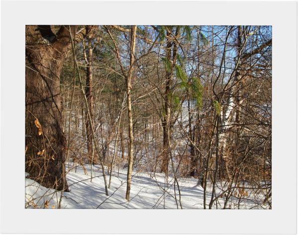 Winter Walk - Along The Trail