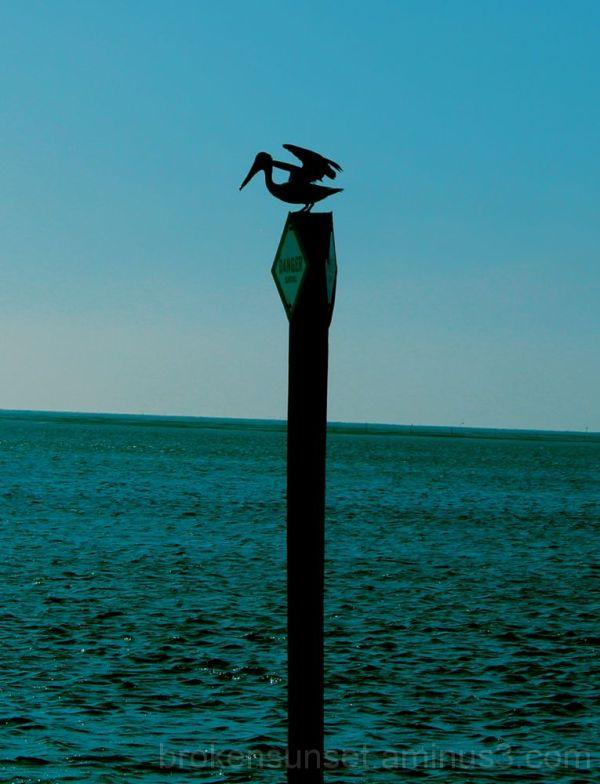 Bird waiting to take fight