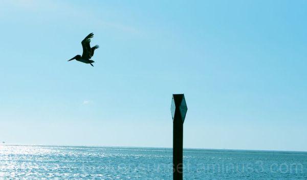 Ocean Bird in flight