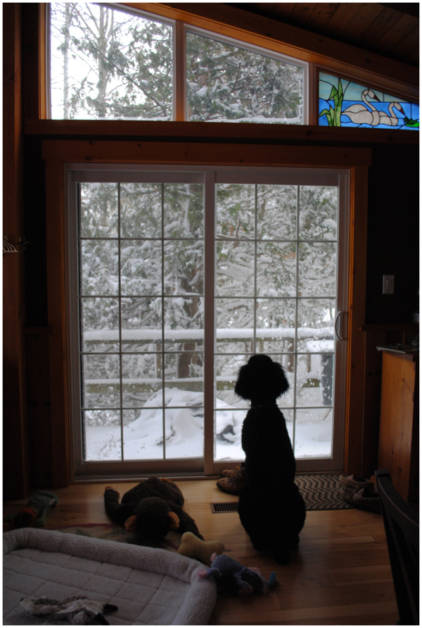 My dog watching a winter scene from inside cottage