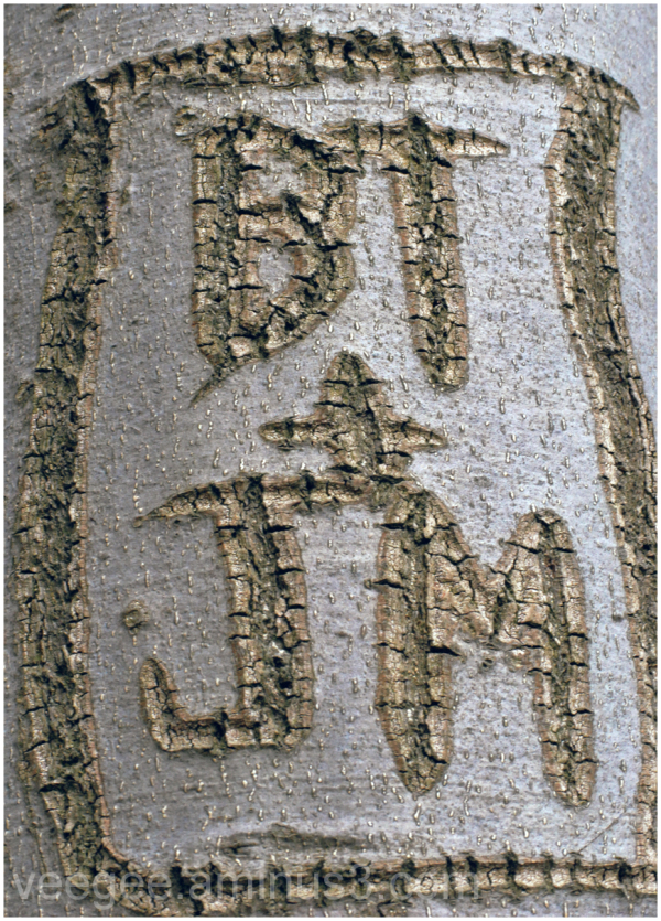 initials carved into a tree