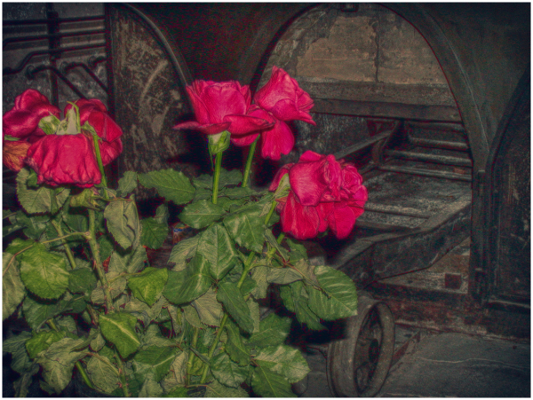 some roses placed at Terezin oven as memorial
