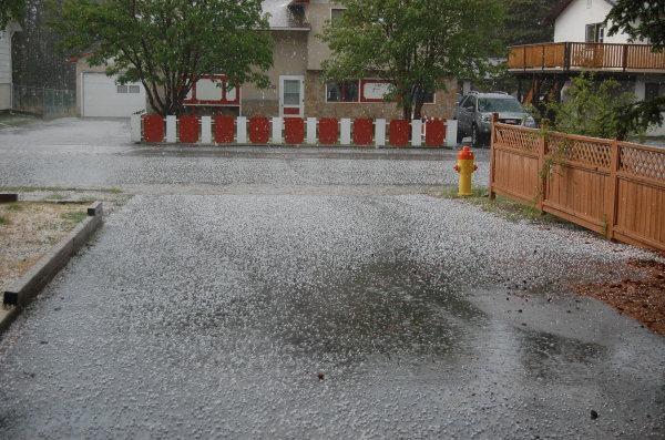 Hale hail