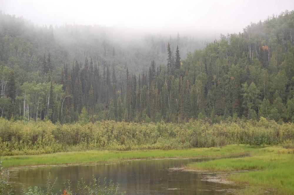 Foggy Times in Dawson