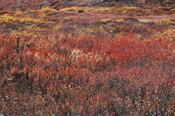 Tombstone Park fall colours