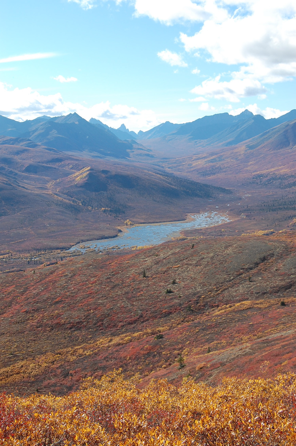 Fall colours in Tombstone Park