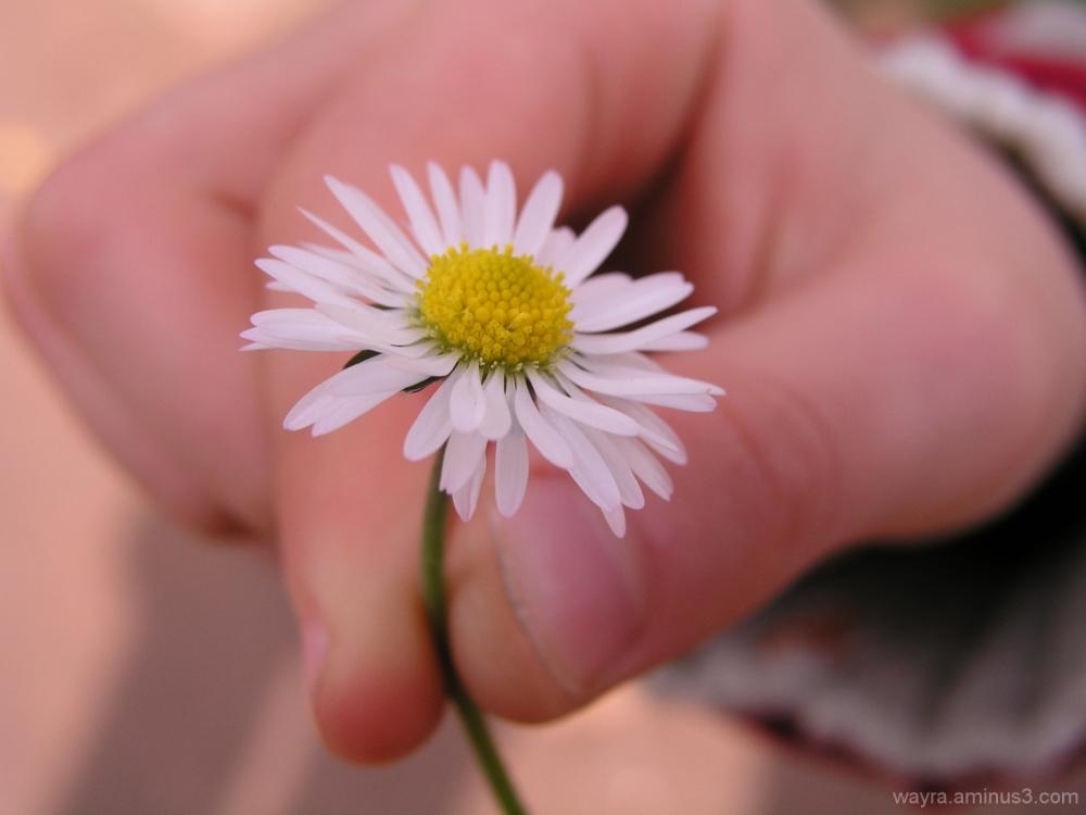 Just a flower...
