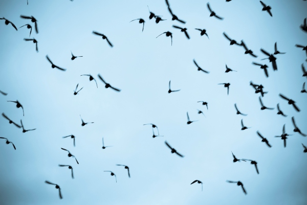 terns flying free!
