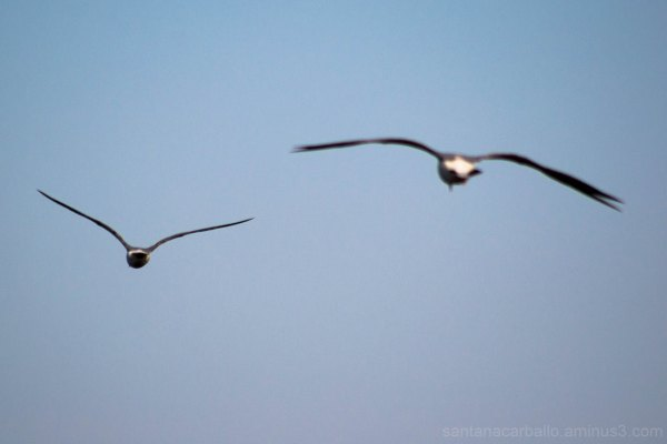 Two seagulls flying away