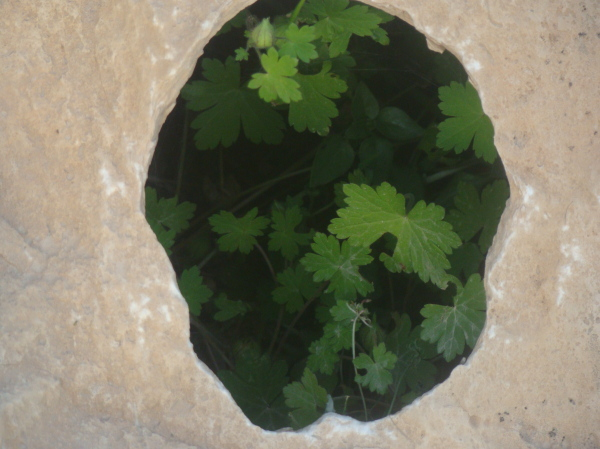 (Cliff's Green Heart)  قلب سبز صخره