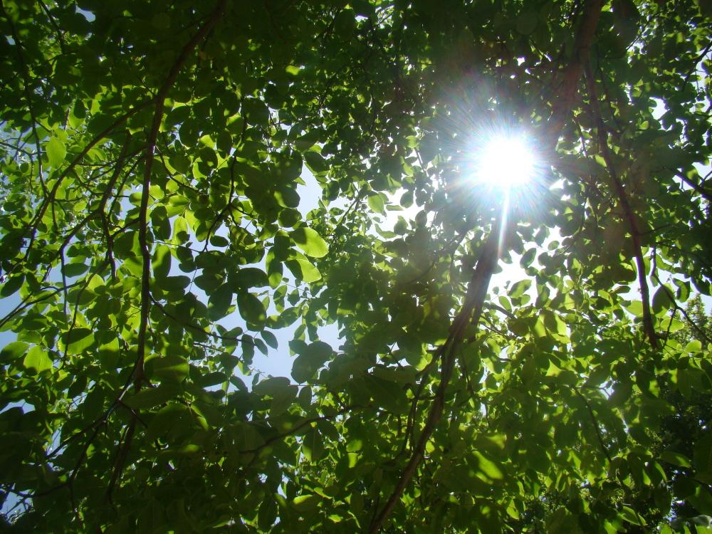 Dreamy Sun