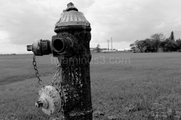 Fire hydrant in field.