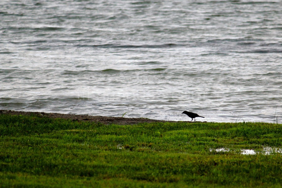 Bird walking on shore