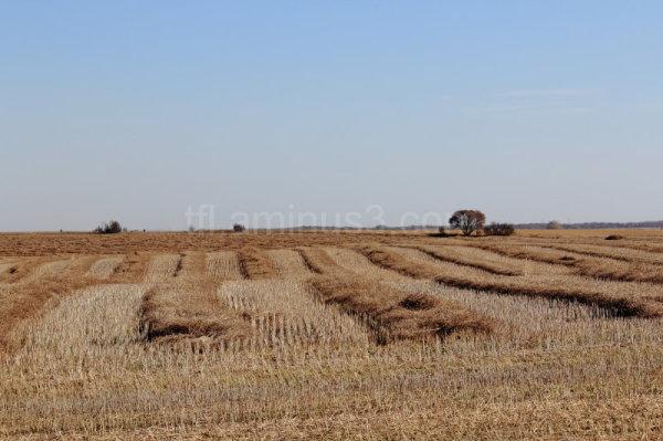 Harvest field in fall