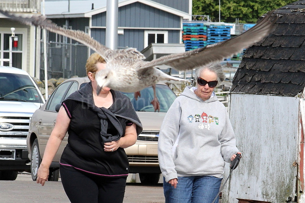Seagull photobombs walkers