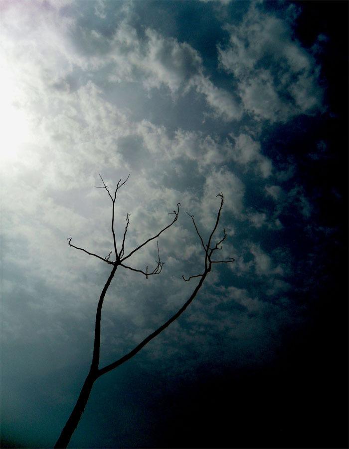 Dried in heaven
