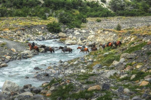 horses at ford in Patagonia