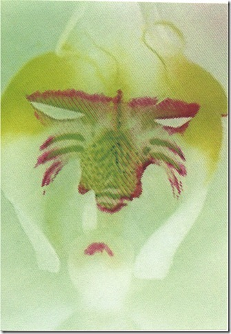 mask, green, orchid