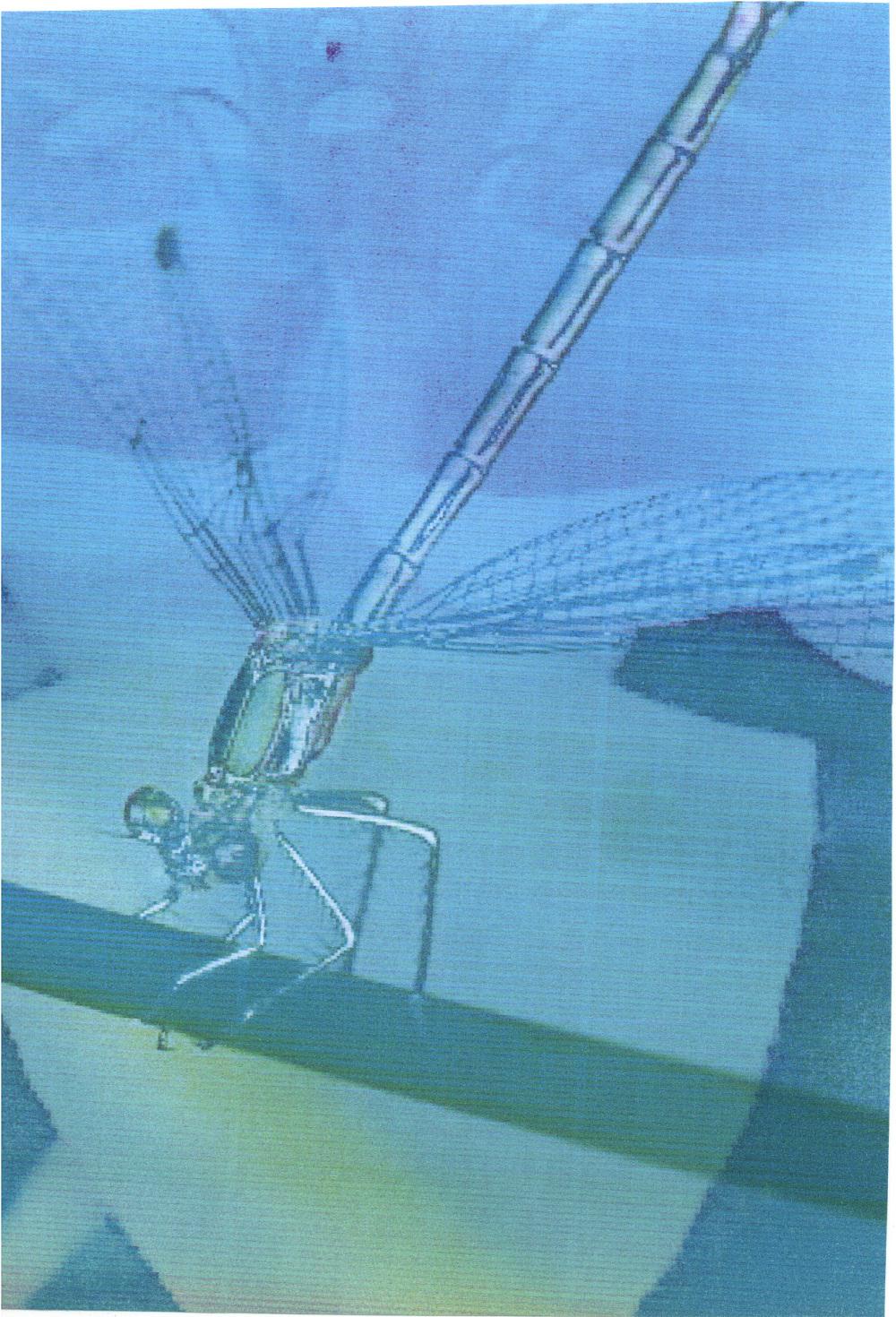 silver dragonfly, Eva Fidjeland, artist