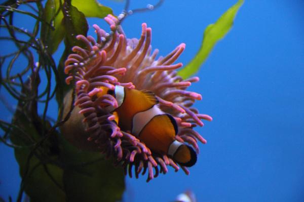 Meeresschauspiel